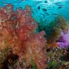 Coral Reef Photo: Jeff Yonover, Raja Rampat